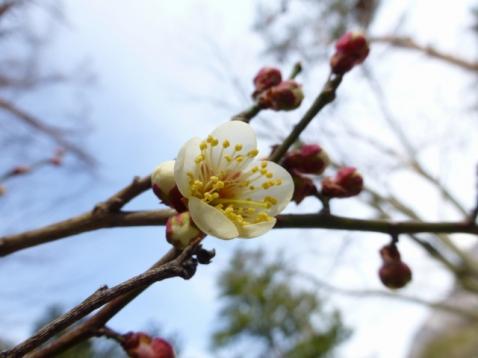 春はすぐそこまで