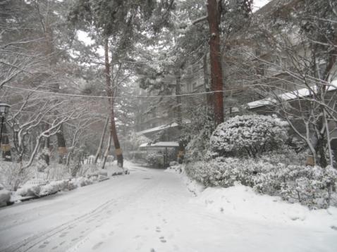 また大雪らしいです
